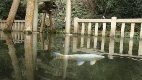 平成27年2月6日「鹿島神宮」⑪