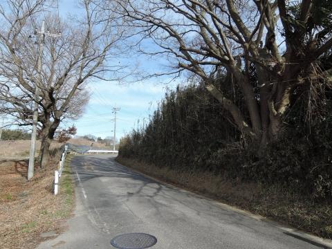 b県道に覆いかぶさる立木②田島地区