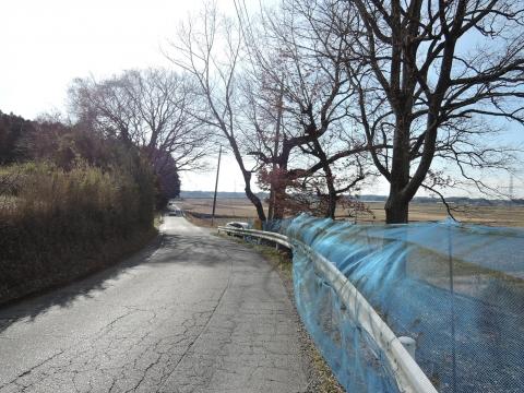e県道に覆いかぶさる立木⑤田島地区