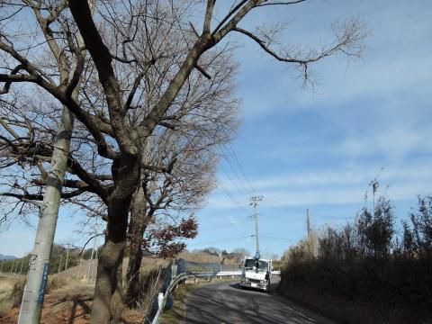 g県道に覆いかぶさる立木⑦田島地区