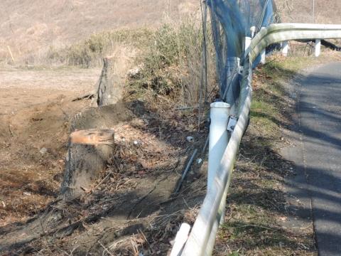 h県道に覆いかぶさる立木⑨田島地区