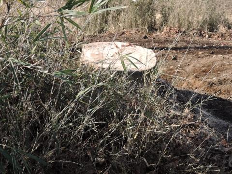 i県道に覆いかぶさる立木⑩田島地区