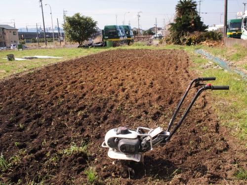 500ジャガイモの植え付け160312001