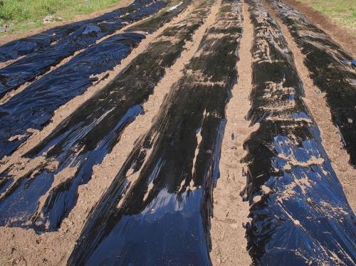 500ジャガイモの植え付け160312007