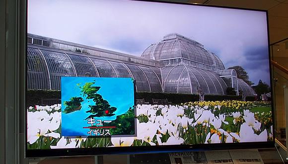 世界遺産キュー王立植物園所蔵 イングリッシュ・ガーデン 英国に集う花々-2
