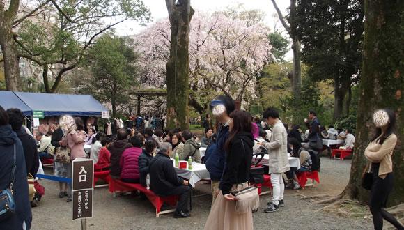 六義園のしだれ桜(2)-1