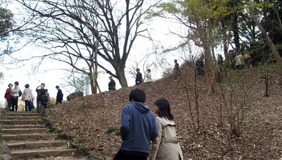 六義園のしだれ桜(2)-3