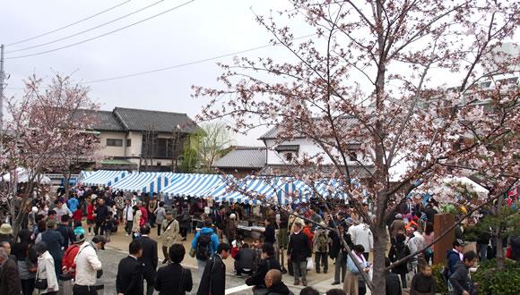 第2回新川千本桜まつり-1