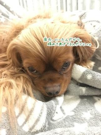 嵐丸 2016.2.23-3