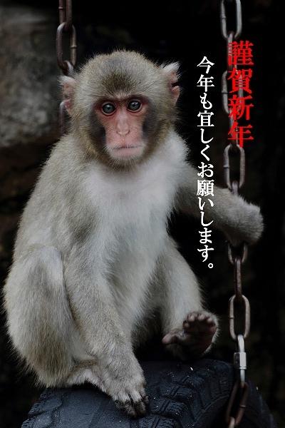 TobeZOO ニホンザル poster