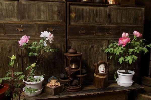 ぼたん茶屋冬牡丹祭 160117 02