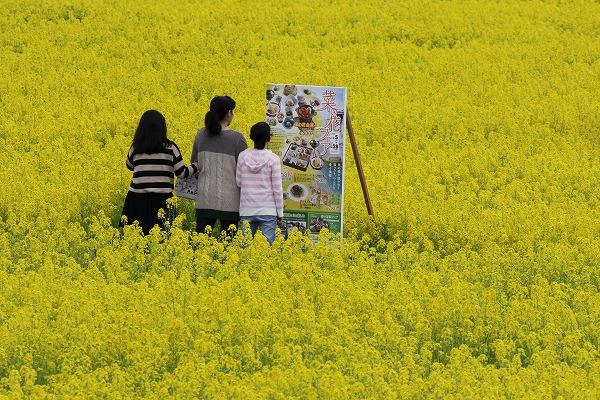 見奈良菜の花 160306 03
