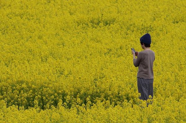 見奈良菜の花 160306 02
