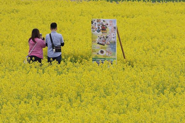 見奈良菜の花 160306 06
