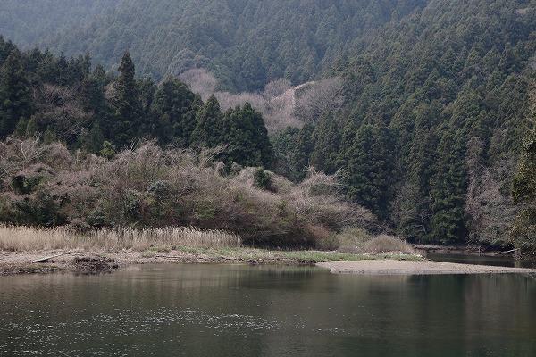 源太桜 160329 02