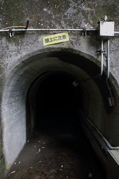源太桜 160329 06