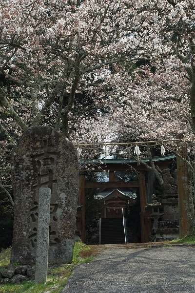 井内吉井神社・ヨメイヨシノ 160329 03