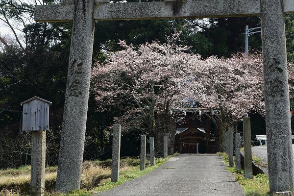 井内吉井神社・ヨメイヨシノ 160329 02