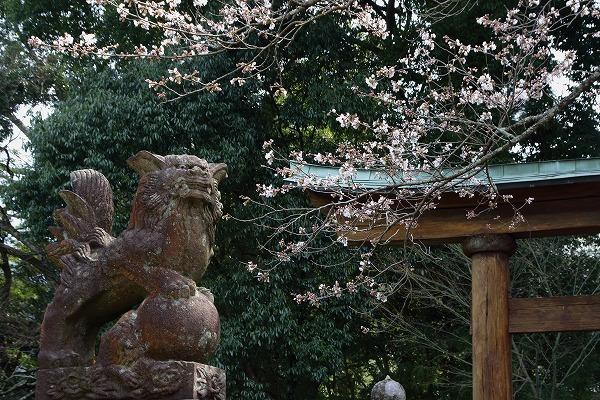 井内吉井神社・ヨメイヨシノ 160329 04