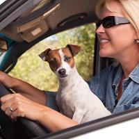 運転席の犬2