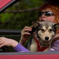運転席の犬1