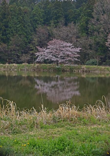 桜 峠-007