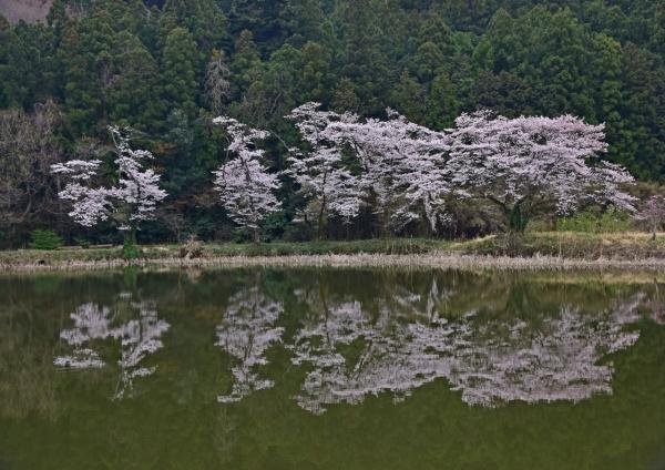 桜 峠-019