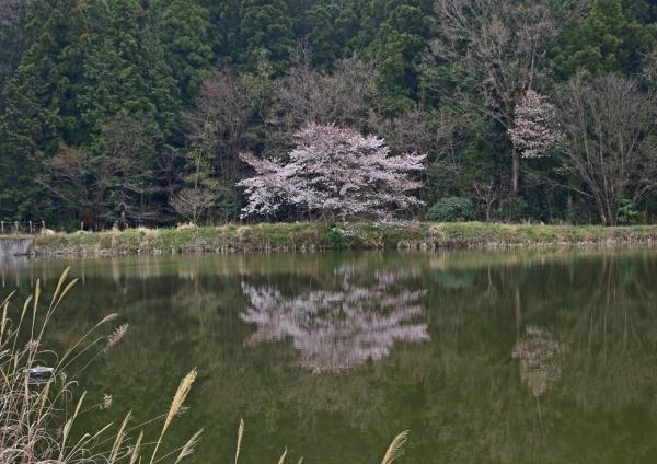 桜 峠-020
