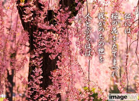 sakura70071202_0215.jpg