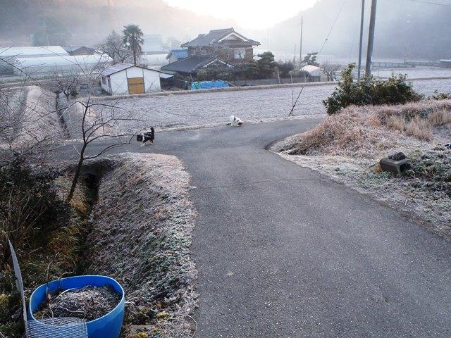 霜の朝20160116