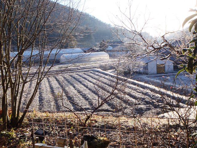 霜の朝20160218