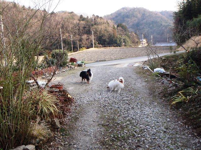 ワン公の遊ぶ庭20160306