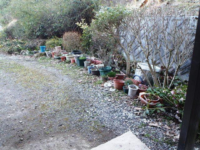植木鉢の一軍20160315