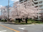 豊島公園横の公団 (2)