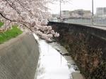 緑地公園前の高川 (2)