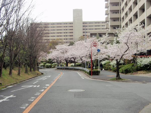 新千里東町3丁目桜 (4)
