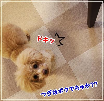 IMG_5504 (2)