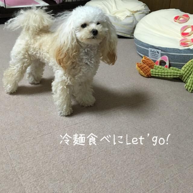 北海道新幹線新青森~新函館北斗間の開業日2
