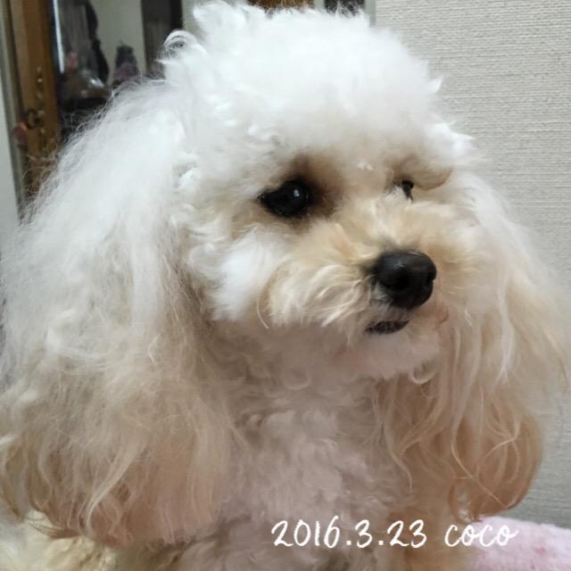 ココ  1歳6ヶ月 ワ━ヽ(*´Д`*)ノ━ィ!!!!