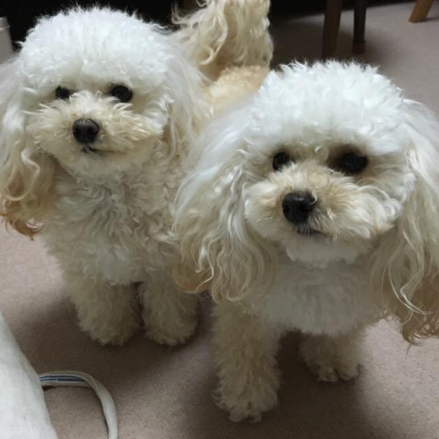 2016.3.29 双子の違い1