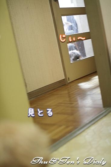 004IMG_9521z.jpg