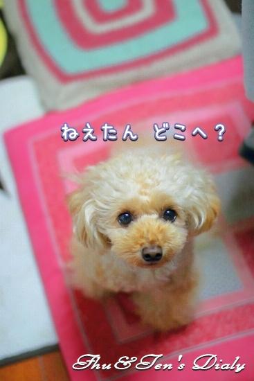 006IMG_6599.jpg