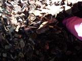 枯葉に埋もれながら