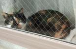 猫 日向ぼっこ中