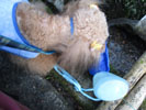 天然水補給