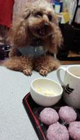 桜餅でおやつ