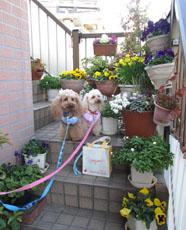 春の散歩 実家へ1