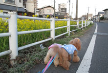 春の散歩 実家へ11