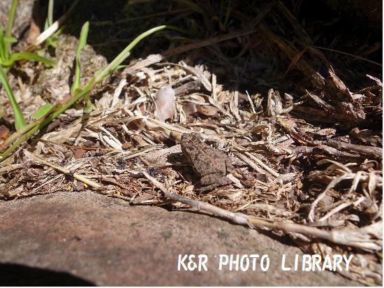 2015年7月19日石棺とタロイモ畑14