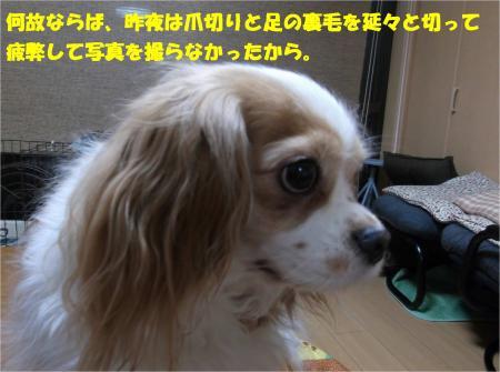 02_convert_20160219194957.jpg